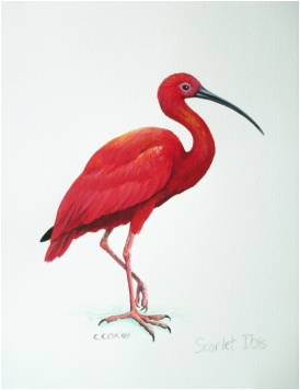 scarlet ibis essay prompt The scarlet ibis by james hurst  this essay will explore reasons why and how humans use emotion to prompt motivation this essay will also give examples of how .